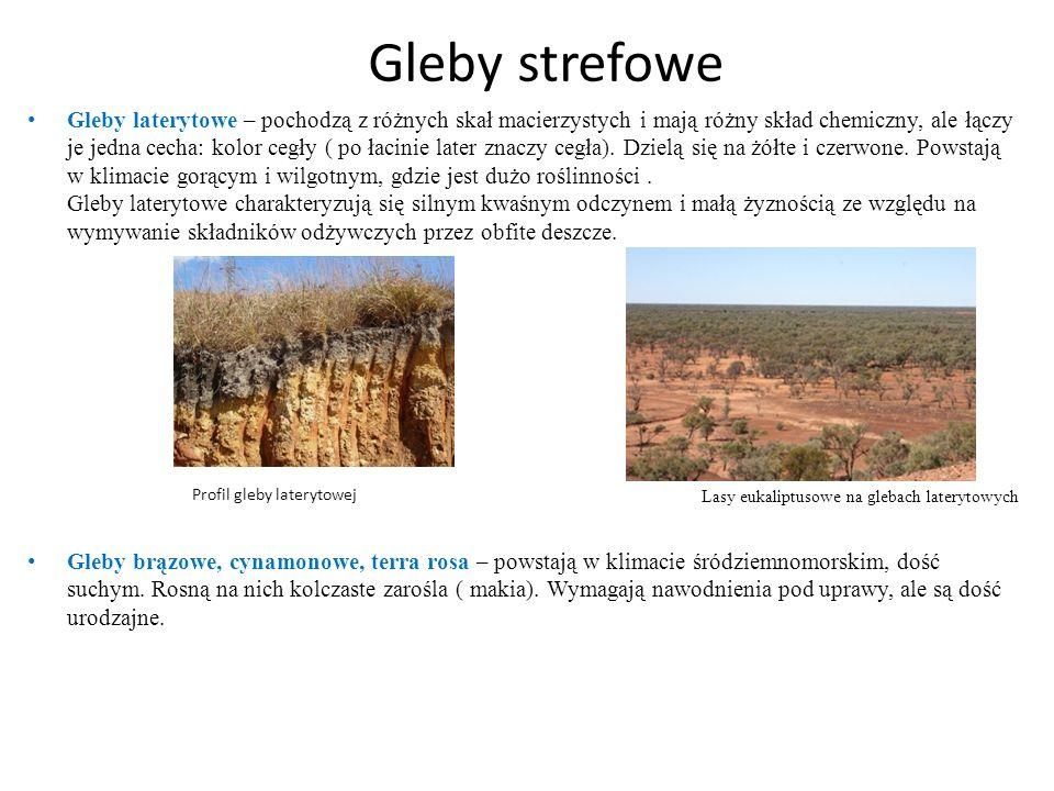 Gleby strefowe Gleby laterytowe – pochodzą z różnych skał macierzystych i mają różny skład chemiczny, ale łączy je jedna cecha: kolor cegły ( po łacin