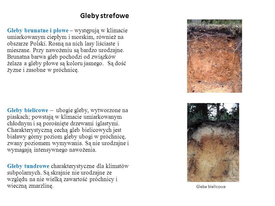 Gleby strefowe Gleby brunatne i płowe – występują w klimacie umiarkowanym ciepłym i morskim, również na obszarze Polski. Rosną na nich lasy liściaste