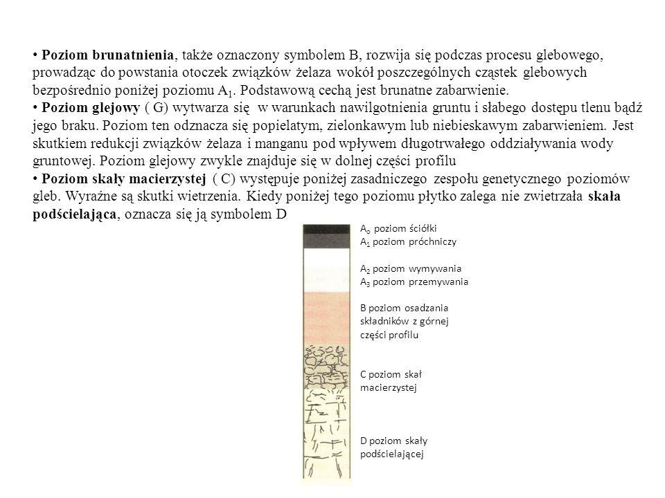 Poziom brunatnienia, także oznaczony symbolem B, rozwija się podczas procesu glebowego, prowadząc do powstania otoczek związków żelaza wokół poszczegó