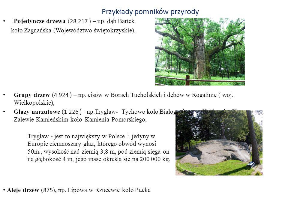 Przykłady pomników przyrody Pojedyncze drzewa ( 28 217 ) – np. dąb Bartek koło Zagnańska (Województwo świętokrzyskie), Grupy drzew ( 4 924 ) – np. cis