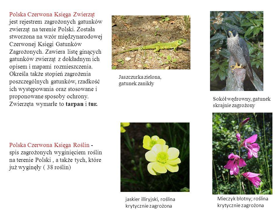 Polska Czerwona Księga Zwierząt jest rejestrem zagrożonych gatunków zwierząt na terenie Polski. Została stworzona na wzór międzynarodowej Czerwonej Ks