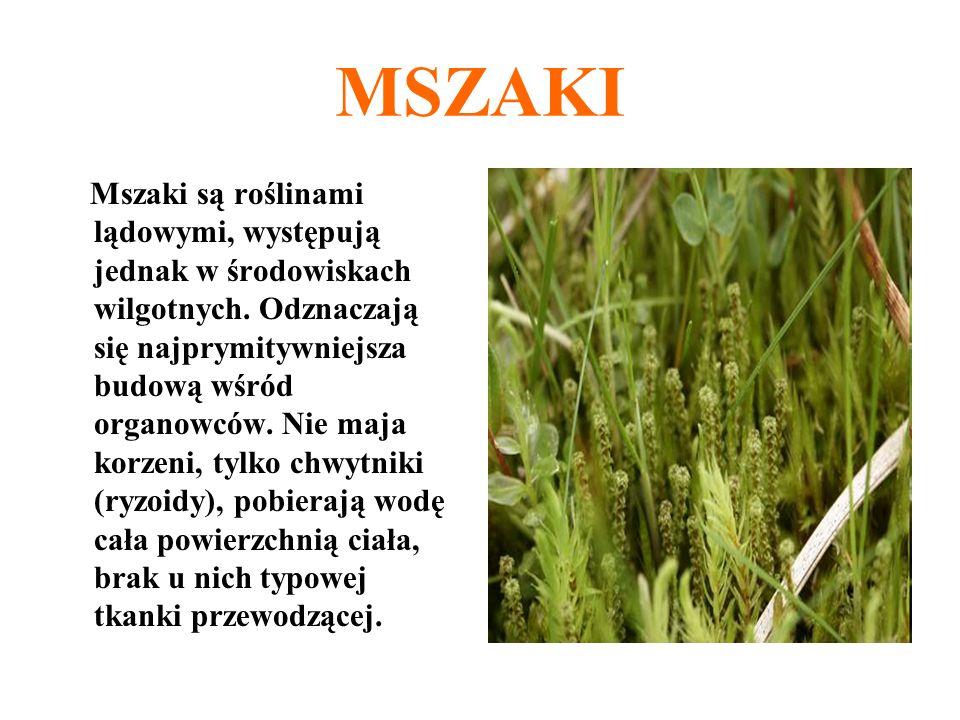 Mszaki są roślinami lądowymi, występują jednak w środowiskach wilgotnych. Odznaczają się najprymitywniejsza budową wśród organowców. Nie maja korzeni,