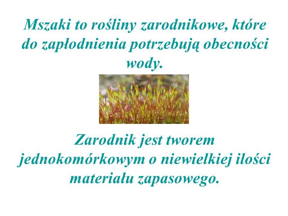 Mszaki to rośliny zarodnikowe, które do zapłodnienia potrzebują obecności wody. Zarodnik jest tworem jednokomórkowym o niewielkiej ilości materiału za