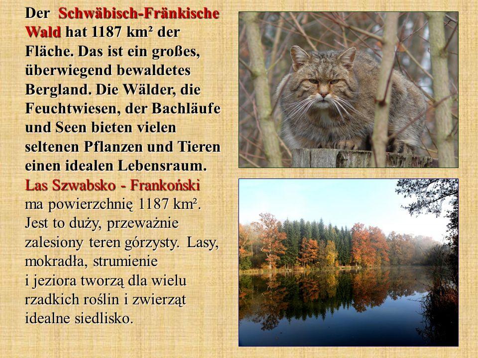 Der Schwäbisch-Fränkische Wald hat 1187 km² der Fläche. Das ist ein großes, überwiegend bewaldetes Bergland. Die Wälder, die Feuchtwiesen, der Bachläu