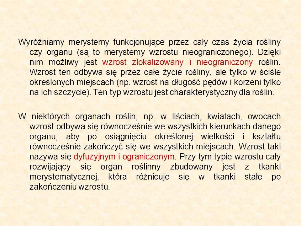 WTÓRNE MERYSTEMY BOCZNE Okolnica (perycykl) - z niej powstają zawiązki korzeni bocznych SKÓRKA KORZENIA KORA PIERWOTNA OKOLNICA (PERYCYKL)