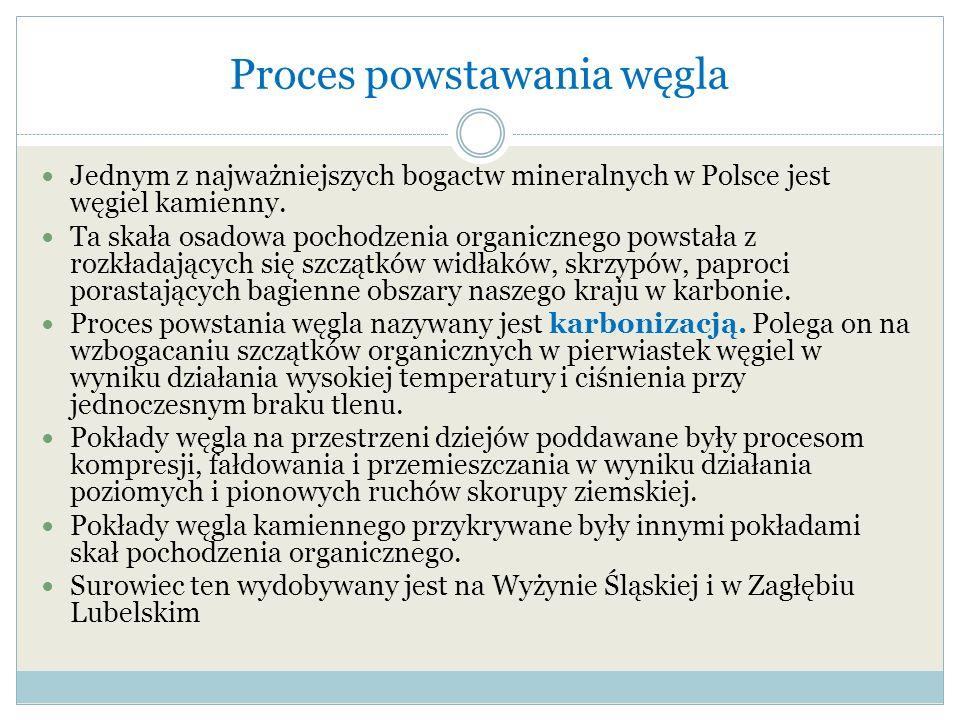 Proces powstawania węgla Jednym z najważniejszych bogactw mineralnych w Polsce jest węgiel kamienny. Ta skała osadowa pochodzenia organicznego powstał