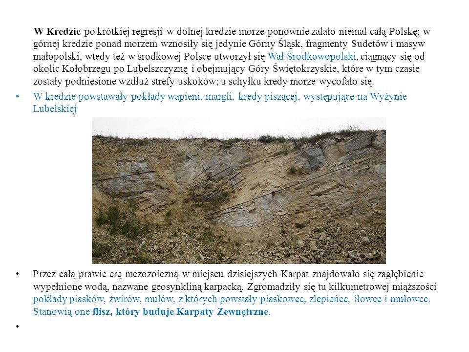 W Kredzie po krótkiej regresji w dolnej kredzie morze ponownie zalało niemal całą Polskę; w górnej kredzie ponad morzem wznosiły się jedynie Górny Ślą