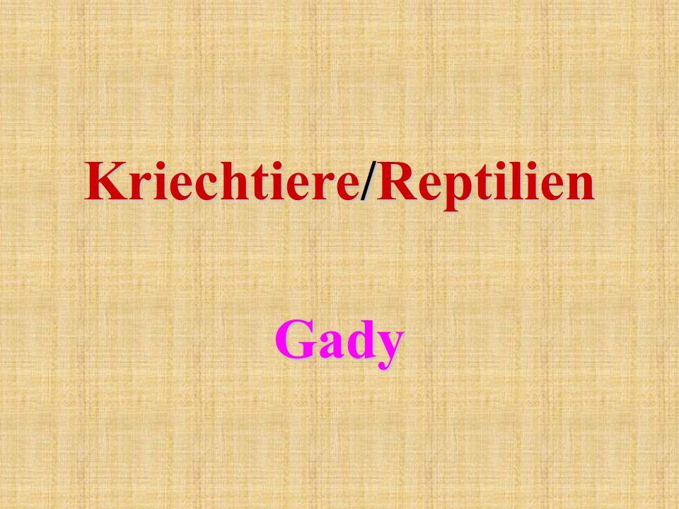 Kriechtiere/Reptilien Gady