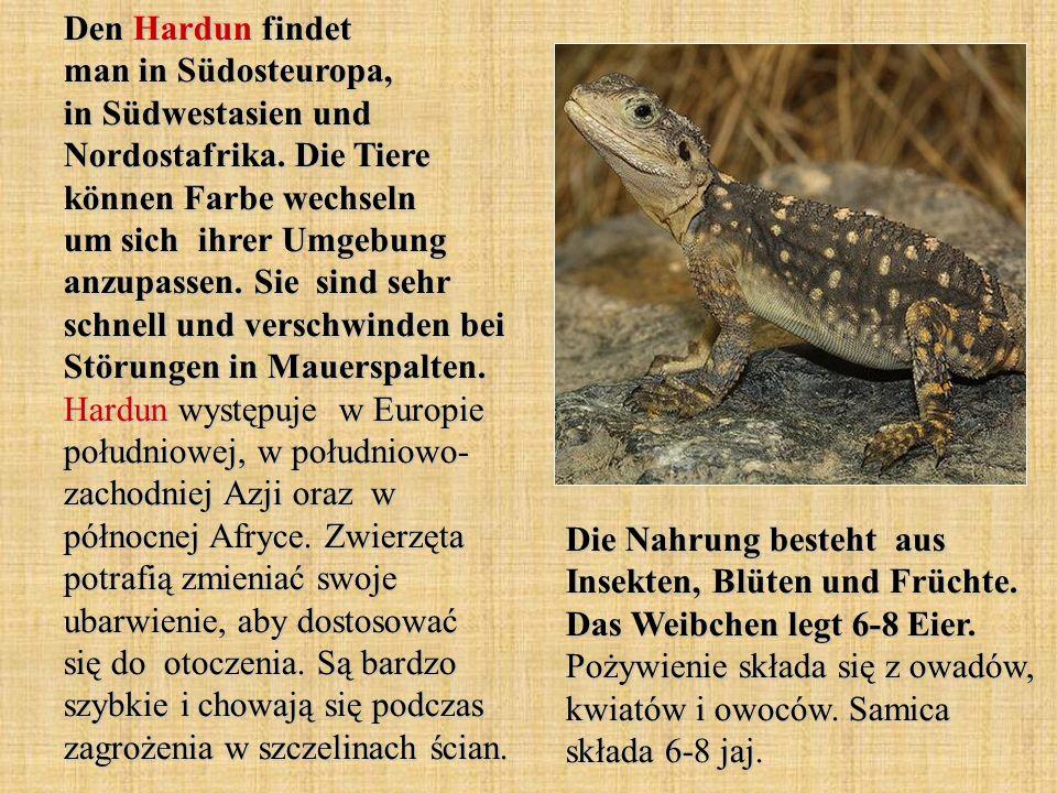 Den Hardun findet man in Südosteuropa, in Südwestasien und Nordostafrika. Die Tiere können Farbe wechseln um sich ihrer Umgebung anzupassen. Sie sind