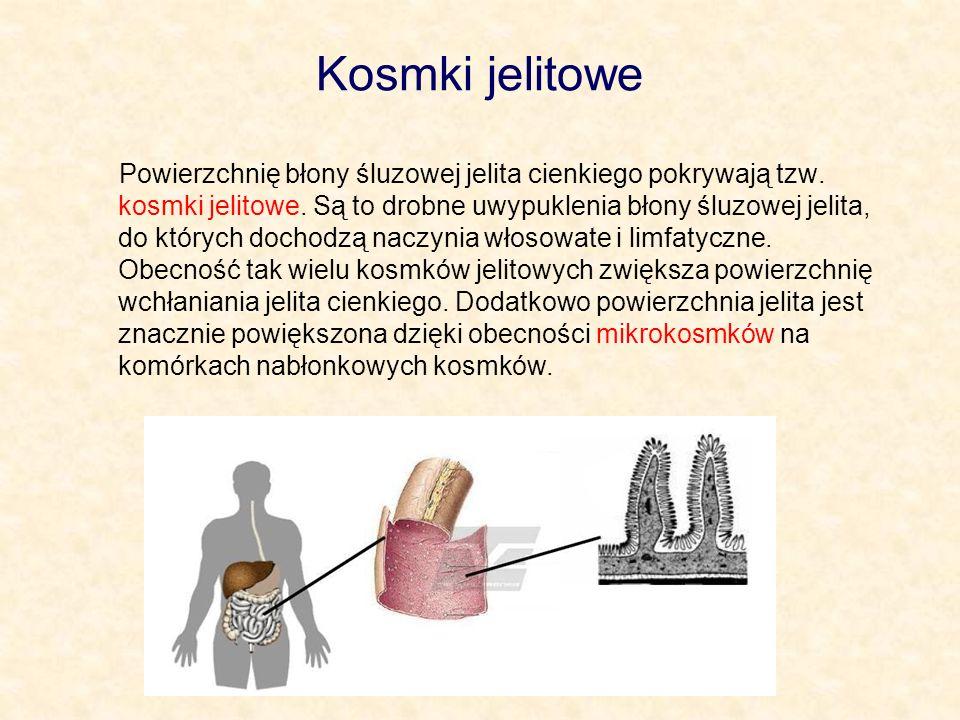 Kosmki jelitowe Powierzchnię błony śluzowej jelita cienkiego pokrywają tzw. kosmki jelitowe. Są to drobne uwypuklenia błony śluzowej jelita, do któryc
