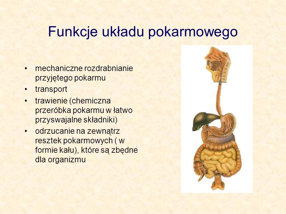 Funkcje układu pokarmowego mechaniczne rozdrabnianie przyjętego pokarmu transport trawienie (chemiczna przeróbka pokarmu w łatwo przyswajalne składnik