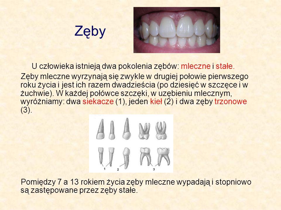 Zęby U człowieka istnieją dwa pokolenia zębów: mleczne i stałe. Zęby mleczne wyrzynają się zwykle w drugiej połowie pierwszego roku życia i jest ich r