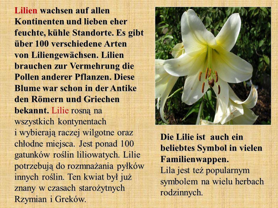 Lilien wachsen auf allen Kontinenten und lieben eher feuchte, kühle Standorte. Es gibt über 100 verschiedene Arten von Liliengewächsen. Lilien brauche