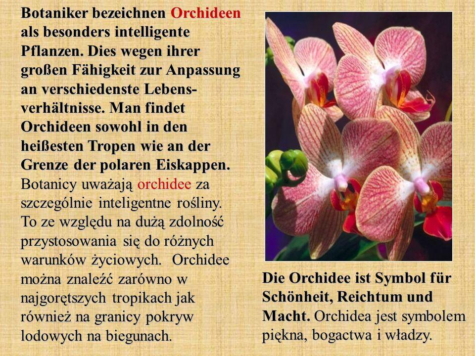 Botaniker bezeichnen Orchideen als besonders intelligente Pflanzen. Dies wegen ihrer großen Fähigkeit zur Anpassung an verschiedenste Lebens- verhältn