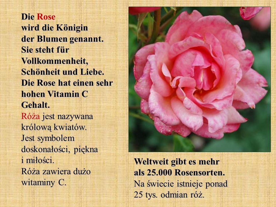 Die Rose wird die Königin der Blumen genannt. Sie steht für Vollkommenheit, Schönheit und Liebe. Die Rose hat einen sehr hohen Vitamin C Gehalt. Róża