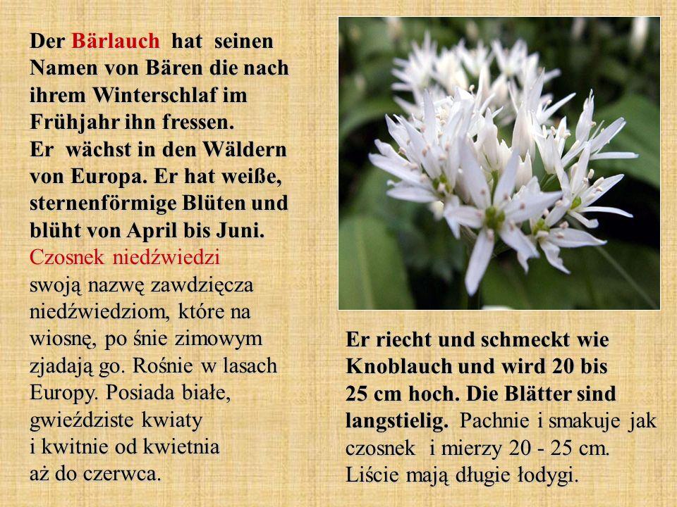 Die Glockenblume verdankt ihren Namen der Blütenform.