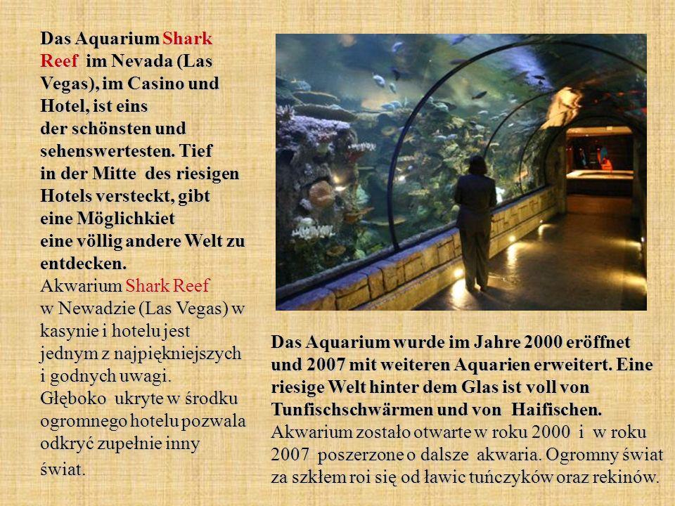 Das Aquarium Shark Reef im Nevada (Las Vegas), im Casino und Hotel, ist eins der schönsten und sehenswertesten. Tief in der Mitte des riesigen Hotels