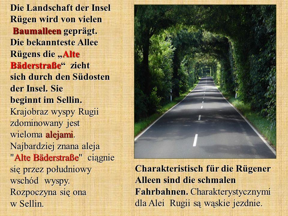 Die Landschaft der Insel Rügen wird von vielen Baumalleen geprägt. Die bekannteste Allee Rügens die Alte Bäderstraße zieht sich durch den Südosten der