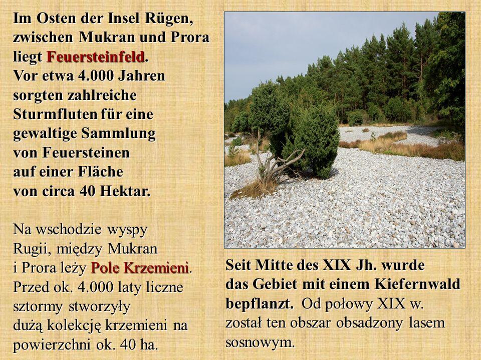 Im Osten der Insel Rügen, zwischen Mukran und Prora liegt Feuersteinfeld. Vor etwa 4.000 Jahren sorgten zahlreiche Sturmfluten für eine gewaltige Samm