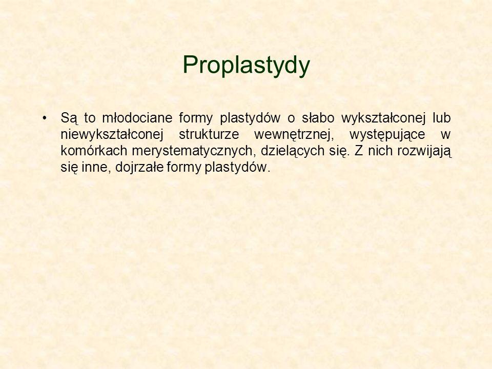 Proplastydy Są to młodociane formy plastydów o słabo wykształconej lub niewykształconej strukturze wewnętrznej, występujące w komórkach merystematyczn