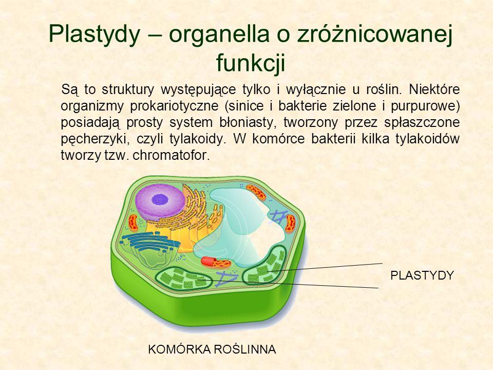 Plastydy – organella o zróżnicowanej funkcji Są to struktury występujące tylko i wyłącznie u roślin. Niektóre organizmy prokariotyczne (sinice i bakte