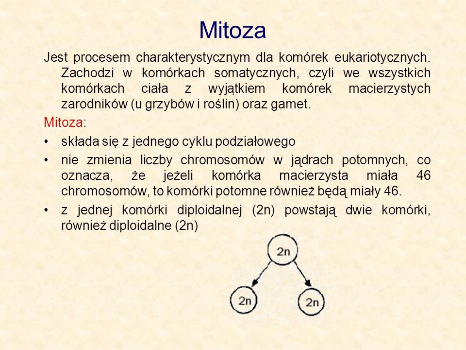 Mitoza Jest procesem charakterystycznym dla komórek eukariotycznych. Zachodzi w komórkach somatycznych, czyli we wszystkich komórkach ciała z wyjątkie