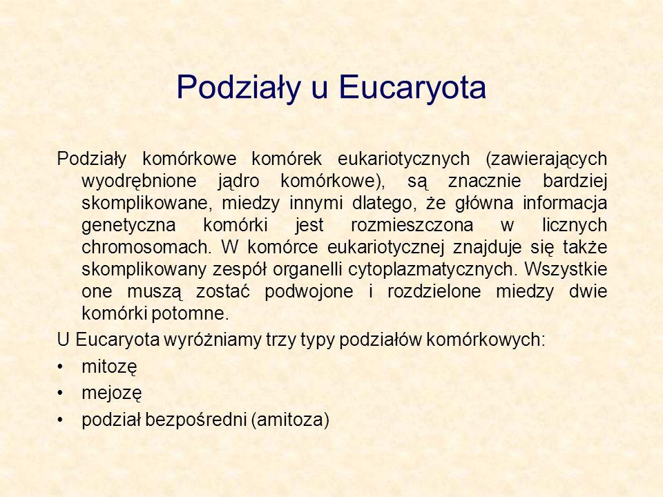 Podziały u Eucaryota Podziały komórkowe komórek eukariotycznych (zawierających wyodrębnione jądro komórkowe), są znacznie bardziej skomplikowane, mied