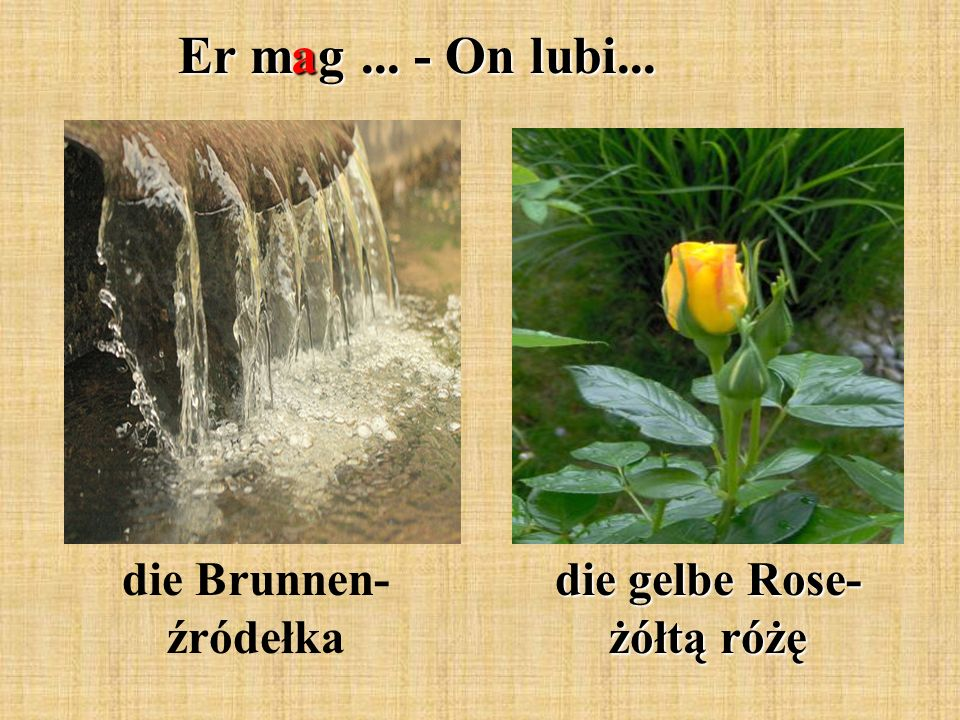 Er mag... - On lubi... die Brunnen- źródełka die gelbe Rose- żółtą różę