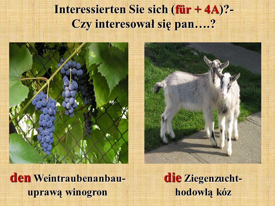 Interessierten Sie sich (für + 4A)?- Czy interesował się pan….? den Weintraubenanbau- uprawą winogron die Ziegenzucht- hodowlą kóz
