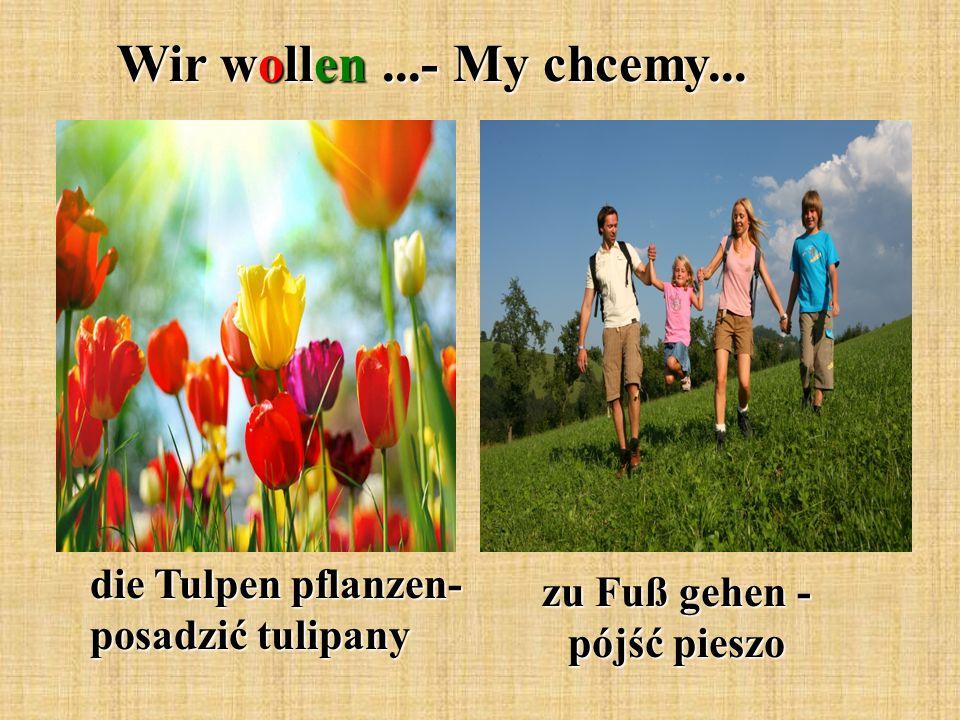 Wir wollen...- My chcemy... die Tulpen pflanzen- posadzić tulipany zu Fuß gehen - pójść pieszo