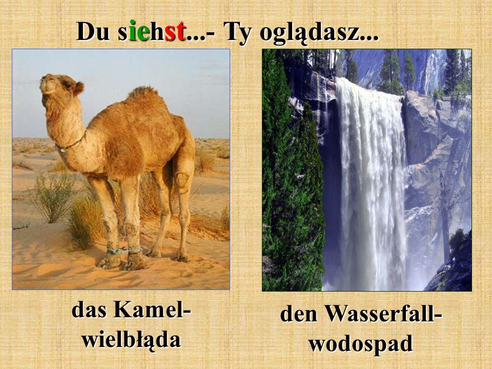 Du s ie h st...- Ty oglądasz... den Wasserfall- wodospad das Kamel- wielbłąda