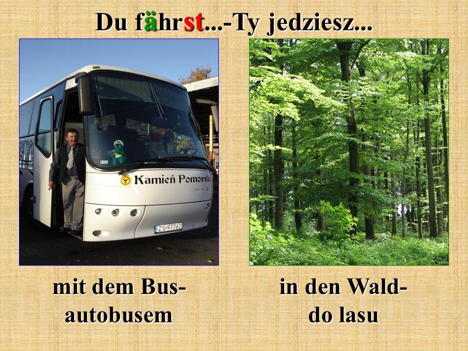 Du f ä hr st...-Ty jedziesz... mit dem Bus- autobusem in den Wald- do lasu