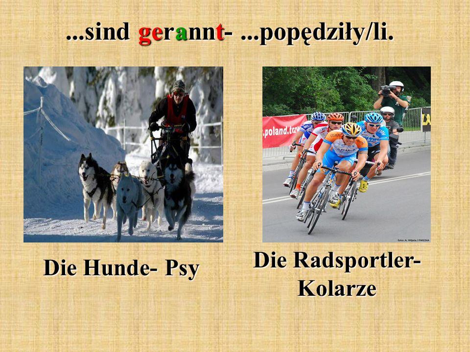...sind gerannt-...popędziły/li. Die Hunde- Psy Die Radsportler- Kolarze