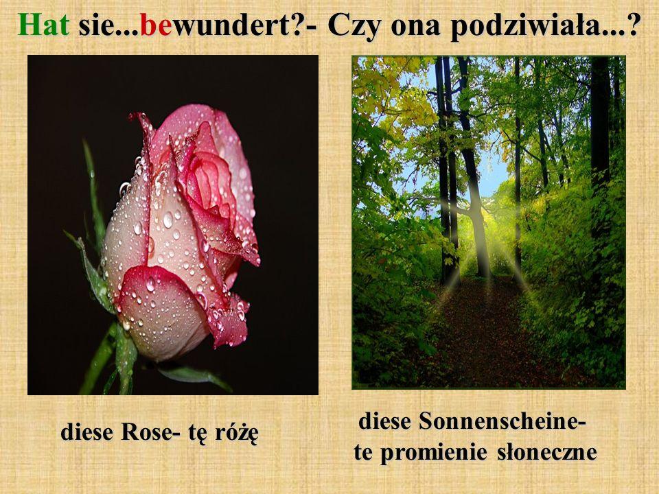 diese Rose- tę różę Hat sie...bewundert?- Czy ona podziwiała....