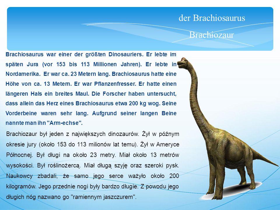 der Brachiosaurus Brachiozaur Brachiosaurus war einer der größten Dinosauriers. Er lebte im späten Jura (vor 153 bis 113 Millionen Jahren). Er lebte i