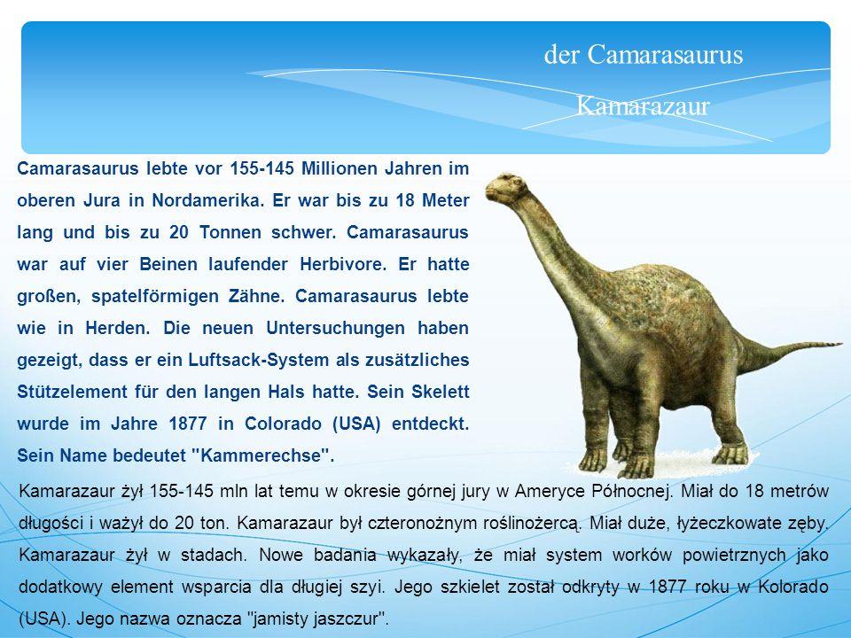 der Camarasaurus Kamarazaur Camarasaurus lebte vor 155-145 Millionen Jahren im oberen Jura in Nordamerika. Er war bis zu 18 Meter lang und bis zu 20 T