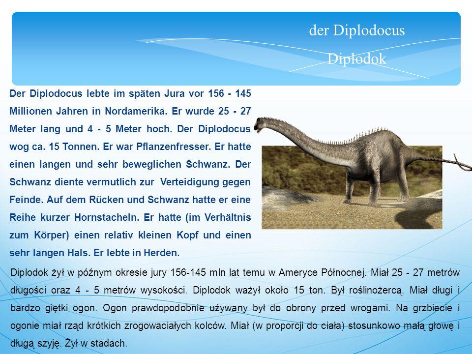 der Diplodocus Diplodok Der Diplodocus lebte im späten Jura vor 156 - 145 Millionen Jahren in Nordamerika. Er wurde 25 - 27 Meter lang und 4 - 5 Meter