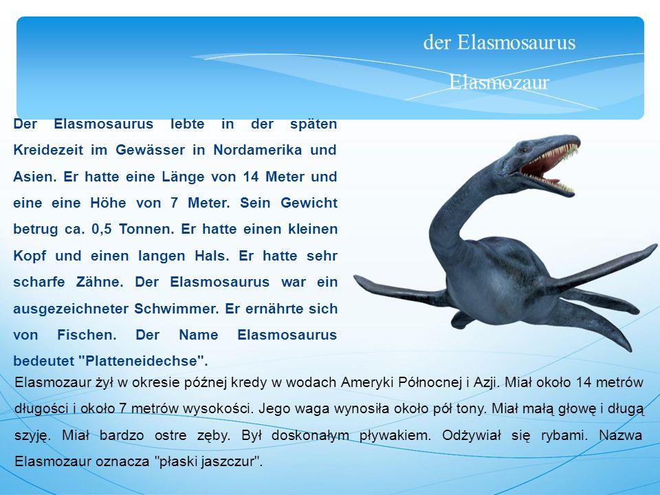 der Elasmosaurus Elasmozaur Der Elasmosaurus lebte in der späten Kreidezeit im Gewässer in Nordamerika und Asien. Er hatte eine Länge von 14 Meter und