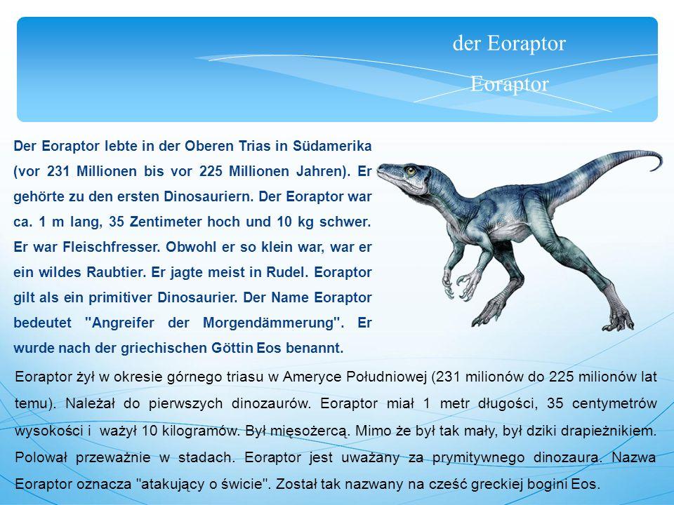 der Eoraptor Eoraptor Der Eoraptor lebte in der Oberen Trias in Südamerika (vor 231 Millionen bis vor 225 Millionen Jahren). Er gehörte zu den ersten
