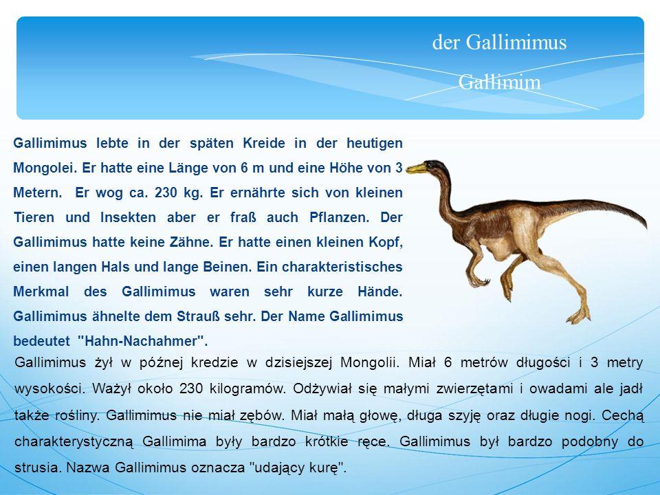der Gallimimus Gallimim Gallimimus lebte in der späten Kreide in der heutigen Mongolei. Er hatte eine Länge von 6 m und eine Höhe von 3 Metern. Er wog