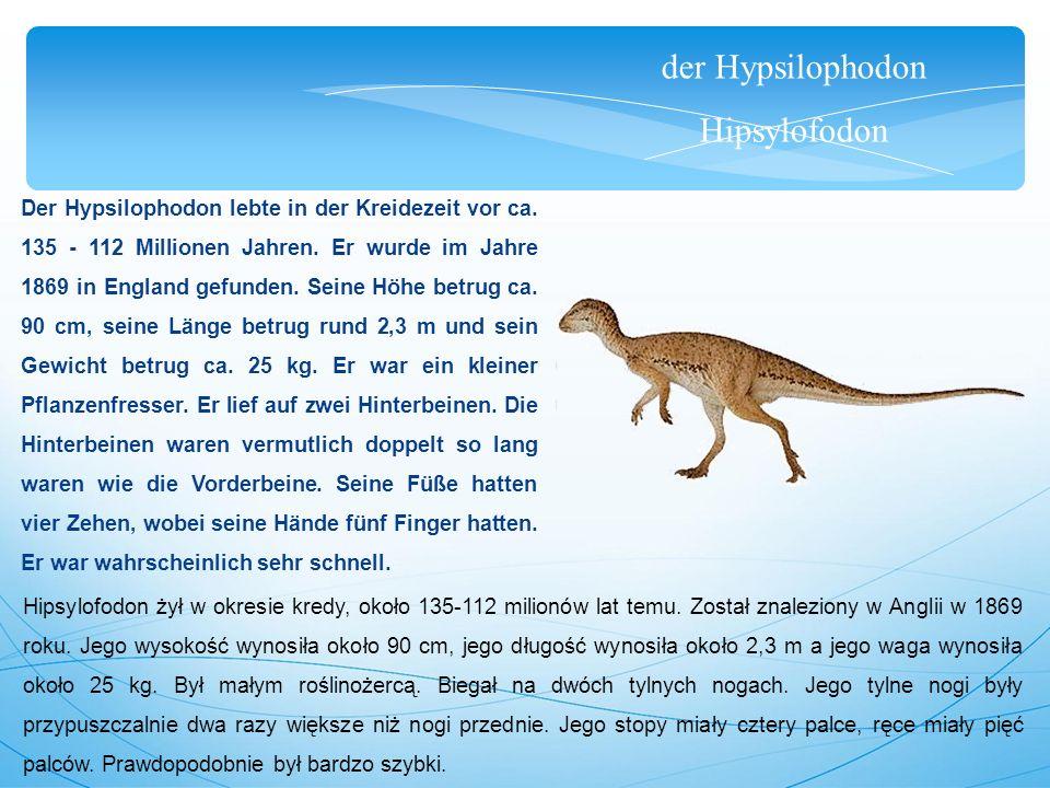der Hypsilophodon Hipsylofodon Der Hypsilophodon lebte in der Kreidezeit vor ca. 135 - 112 Millionen Jahren. Er wurde im Jahre 1869 in England gefunde
