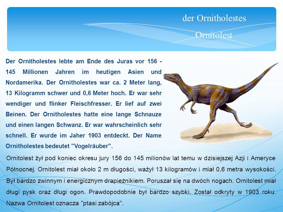 der Ornitholestes Ornitolest Der Ornitholestes lebte am Ende des Juras vor 156 - 145 Millionen Jahren im heutigen Asien und Nordamerika.