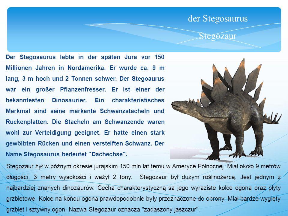 der Stegosaurus Stegozaur Der Stegosaurus lebte in der späten Jura vor 150 Millionen Jahren in Nordamerika. Er wurde ca. 9 m lang, 3 m hoch und 2 Tonn