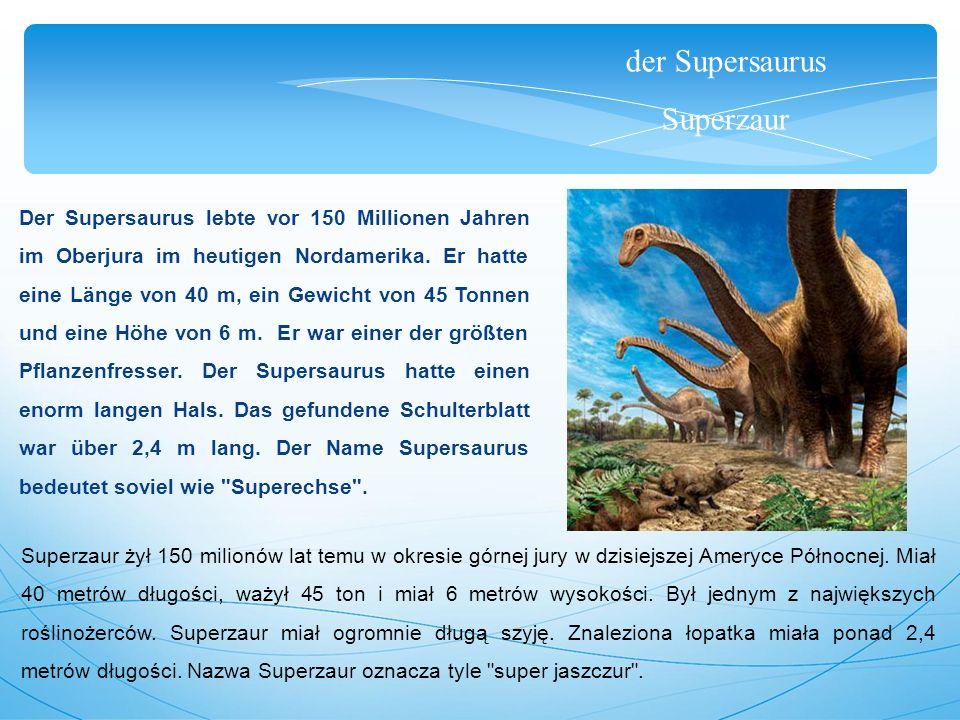 der Supersaurus Superzaur Der Supersaurus lebte vor 150 Millionen Jahren im Oberjura im heutigen Nordamerika. Er hatte eine Länge von 40 m, ein Gewich