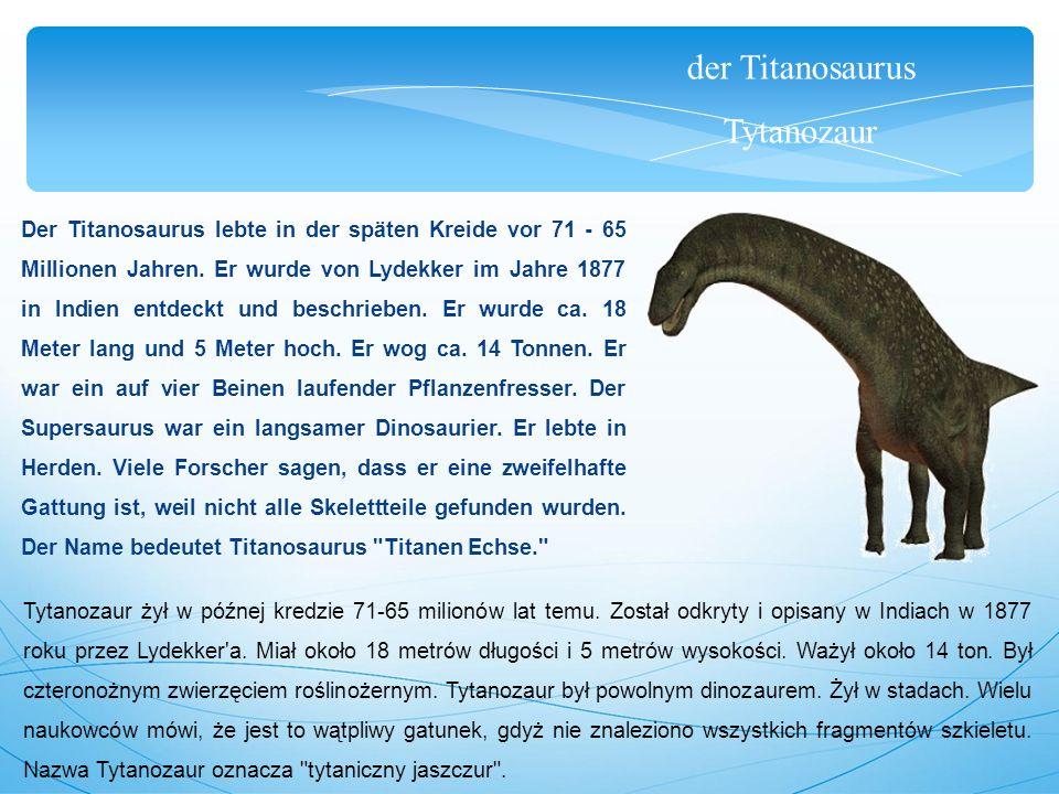 der Titanosaurus Tytanozaur Der Titanosaurus lebte in der späten Kreide vor 71 - 65 Millionen Jahren. Er wurde von Lydekker im Jahre 1877 in Indien en