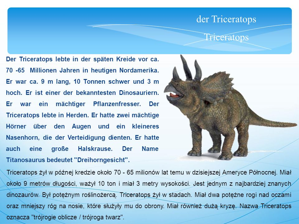 der Triceratops Triceratops Der Triceratops lebte in der späten Kreide vor ca. 70 -65 Millionen Jahren in heutigen Nordamerika. Er war ca. 9 m lang, 1