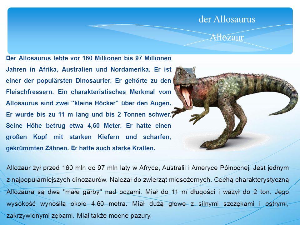 der Allosaurus Allozaur Der Allosaurus lebte vor 160 Millionen bis 97 Millionen Jahren in Afrika, Australien und Nordamerika. Er ist einer der populär