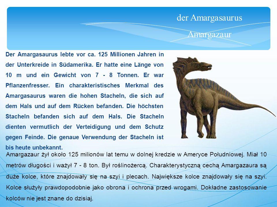 der Amargasaurus Amargazaur Der Amargasaurus lebte vor ca. 125 Millionen Jahren in der Unterkreide in Südamerika. Er hatte eine Länge von 10 m und ein