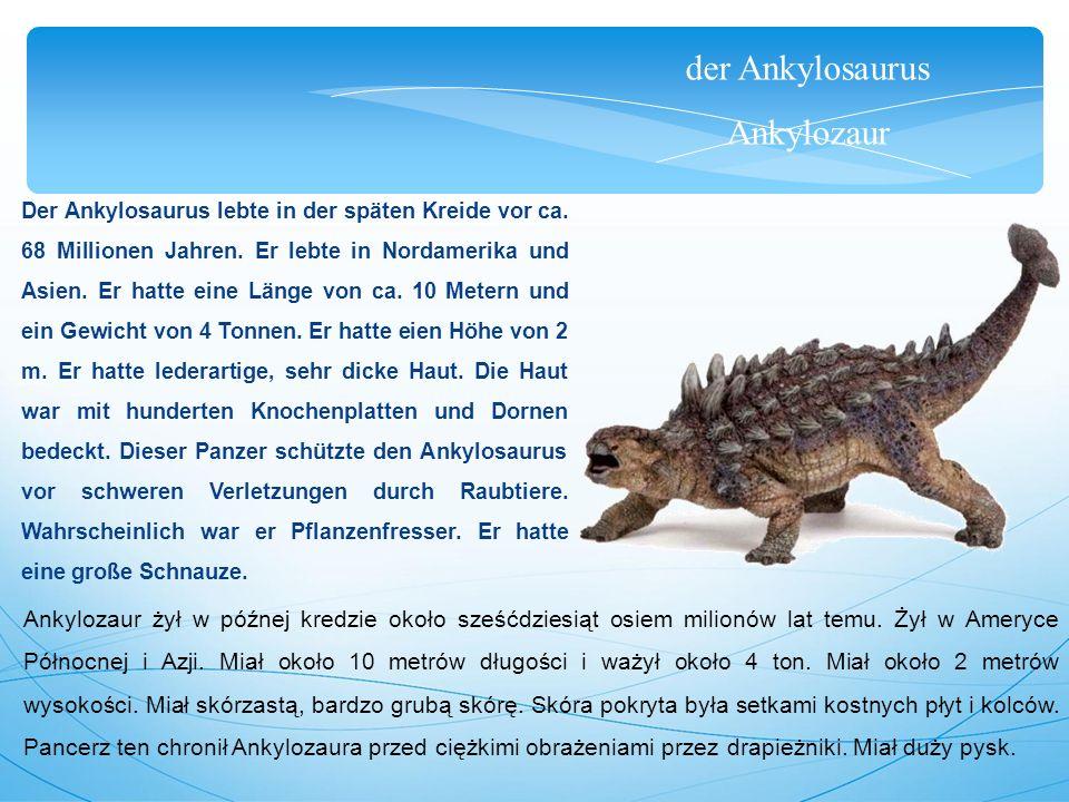 der Ankylosaurus Ankylozaur Der Ankylosaurus lebte in der späten Kreide vor ca. 68 Millionen Jahren. Er lebte in Nordamerika und Asien. Er hatte eine