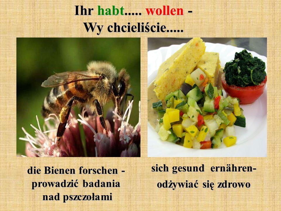 Ihr habt..... wollen - Wy chcieliście..... die Bienen forschen - prowadzić badania nad pszczołami sich gesund ernähren- odżywiać się zdrowo